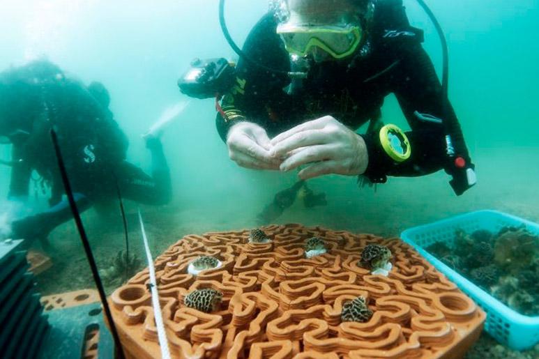 Arrecife en Impresión 3D en Japón